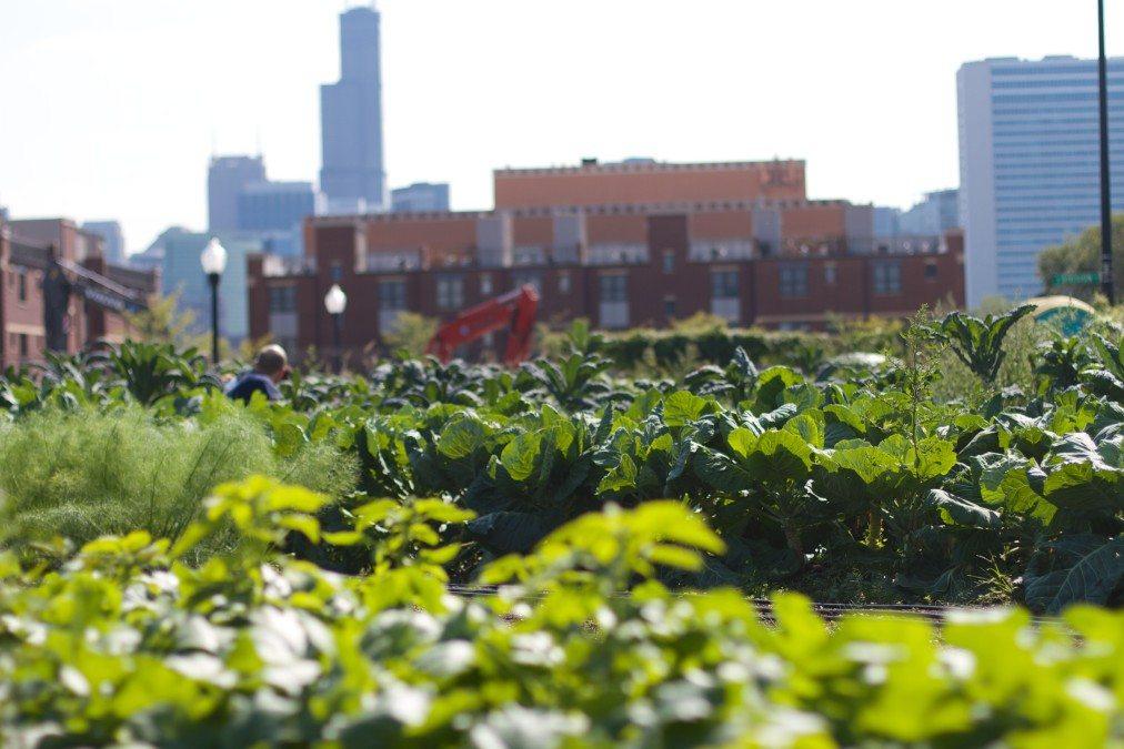 Farm and the City