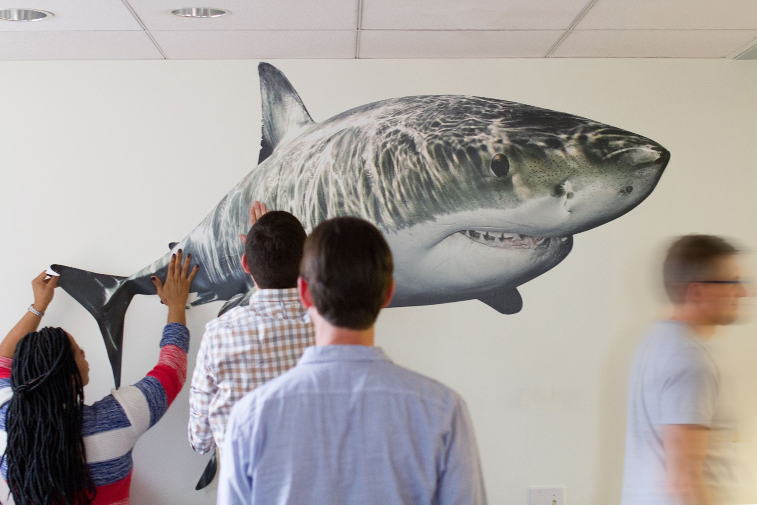 Signal Employees Reveal Jaws-dropping Projects During Shark Week